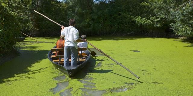 france; 85; marais poitevin : promenade en barque à maillezais