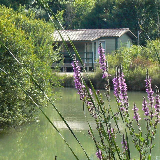 Village De Gites Chalets De La Heronniere
